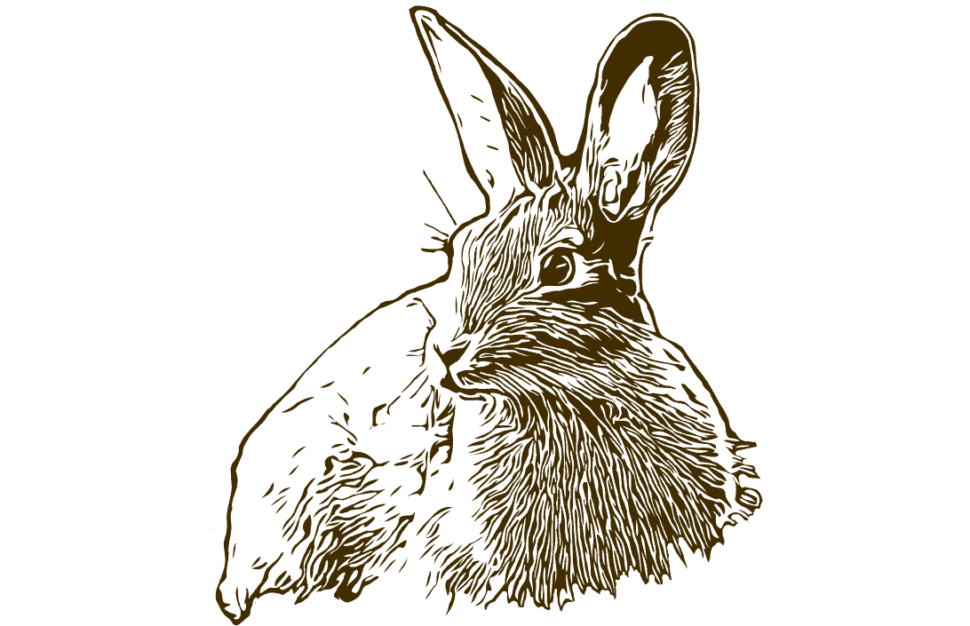 Kaninchen 524